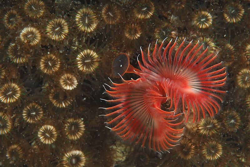 29. september 2007 – Piran – Odprto državno prvenstvo v podvodni fotografiji