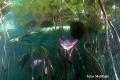 2008-05-31_bled_021-scuka_2249