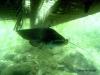 2008-05-31_bled_054-som_2250