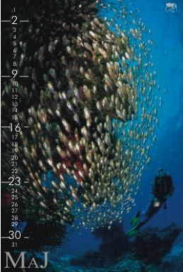 koledar2003-05_810