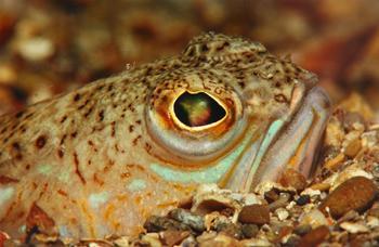 21. oktober 2006 – Piran – odprto državno prvenstvo v podvodni fotografiji